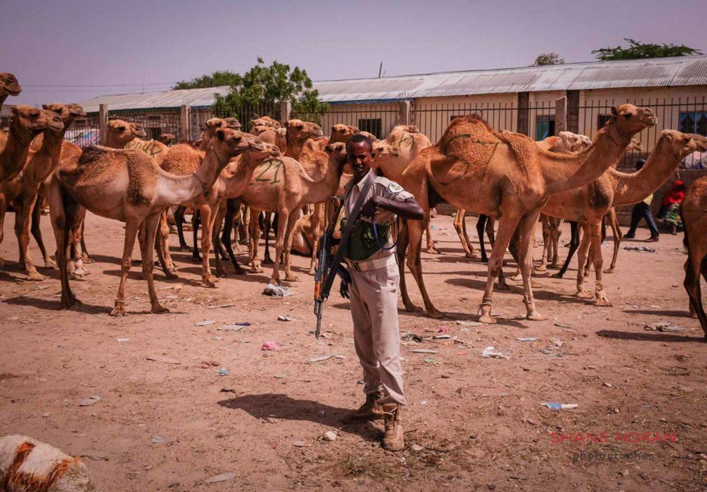 At the camel fair. Hargeisa, Somaliland